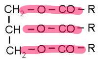 脂肪の構造式