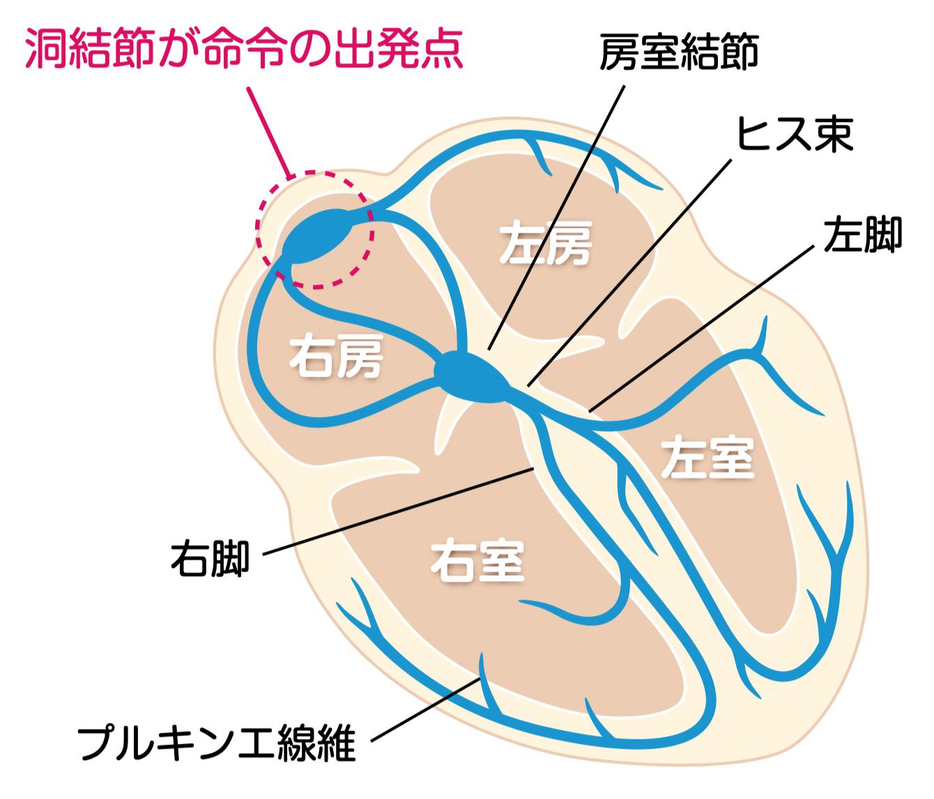 画像:これだけ心電図p11, 日本医事新報
