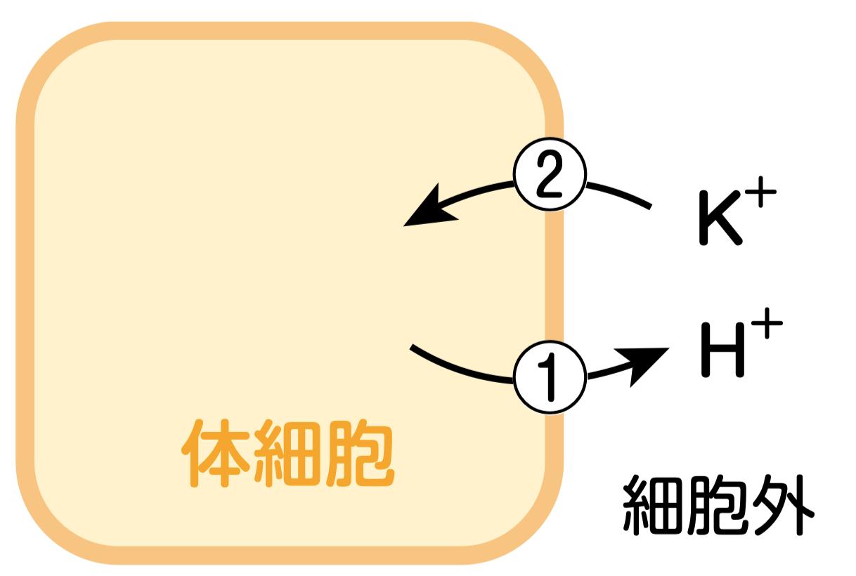 アルカレミア_HとKの移動_これだけ輸液