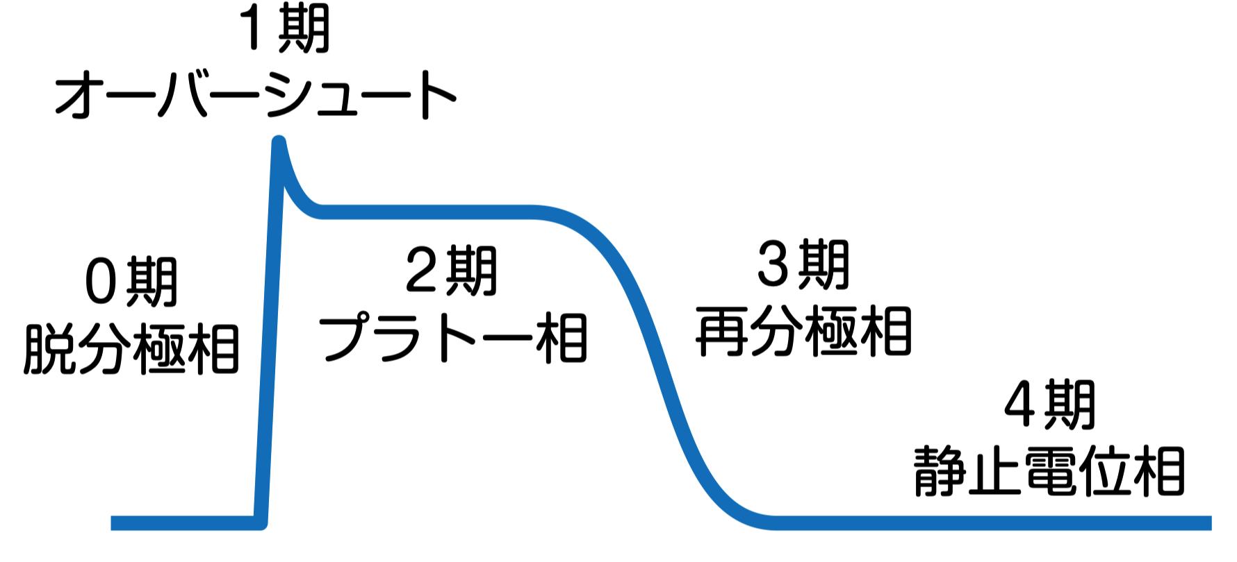 心電図_静止膜電位