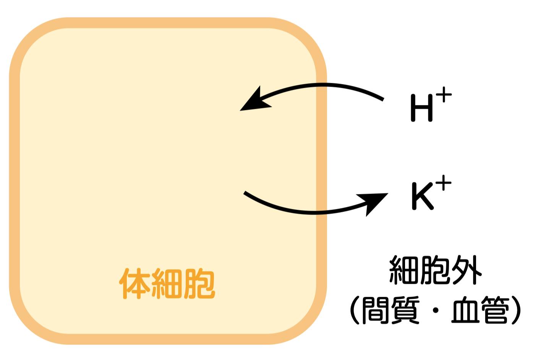 アシデミア_HとKの移動_これだけ輸液